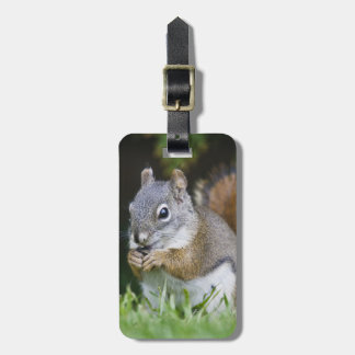 Canada, British Columbia, Red Squirrel Pine Luggage Tag