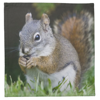Canada, British Columbia, Red Squirrel Pine Napkin