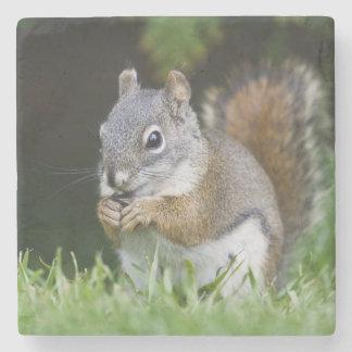 Canada, British Columbia, Red Squirrel Pine Stone Coaster