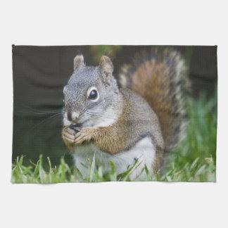Canada, British Columbia, Red Squirrel Pine Tea Towel