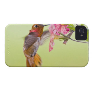 Canada, British Columbia, Rufous Hummingbird Case-Mate iPhone 4 Cases