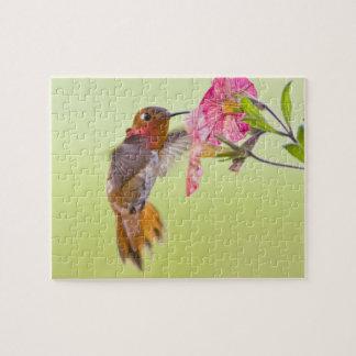 Canada, British Columbia, Rufous Hummingbird Jigsaw Puzzle