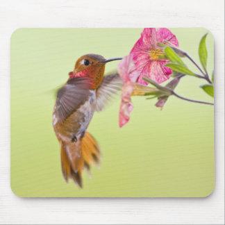Canada, British Columbia, Rufous Hummingbird Mouse Mat