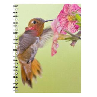 Canada, British Columbia, Rufous Hummingbird Notebook