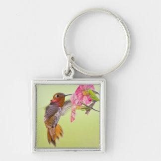 Canada, British Columbia, Rufous Hummingbird Silver-Colored Square Key Ring