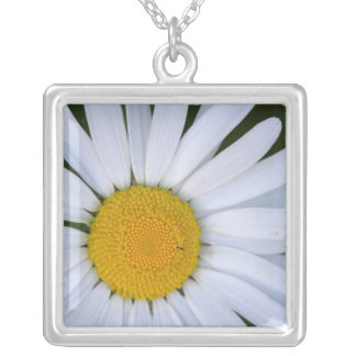 Canada, British Columbia, Vancouver Island 8 Silver Plated Necklace