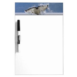 Canada, British Columbia, Vancouver Island, Dry Erase Board