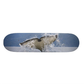 Canada, British Columbia, Vancouver Island, Skateboard