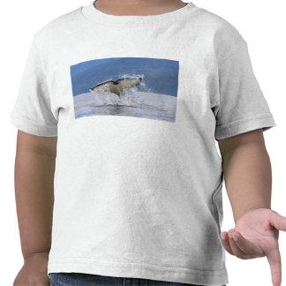 Canada, British Columbia, Vancouver Island, Tshirts