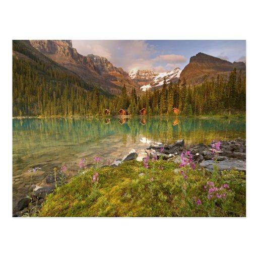 Canada, British Columbia, Yoho National Park. 2 Post Cards
