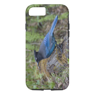 Canada:  British Columbia, Yoho NP, Stellar jay, iPhone 8/7 Case