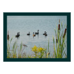 Canada Geese And Cattails Poster