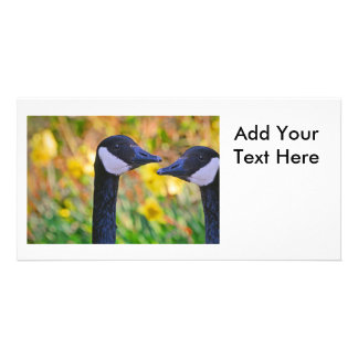 Canada Geese and Daffodils Photo Cards