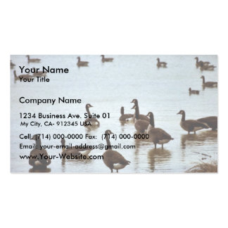 Canada geese at an Ohio wetland area Business Cards