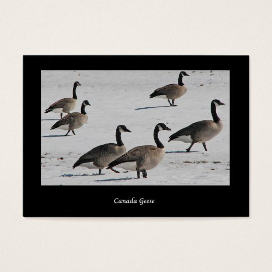 Canada Geese ATC Business Card