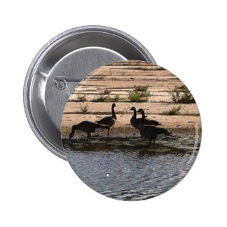 Canada Geese by the Puddle 1 6 Cm Round Badge
