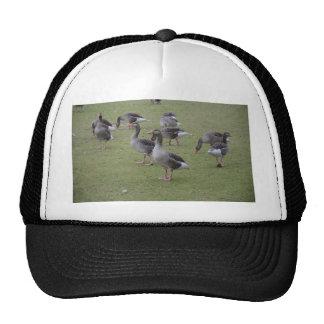 Canada Geese Cap