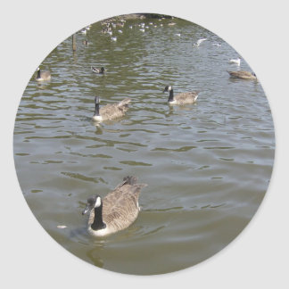 Canada Geese Classic Round Sticker