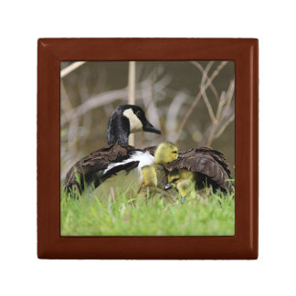 Canada Geese Family Gift Box