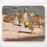 Canada Geese Goslings Mousepad