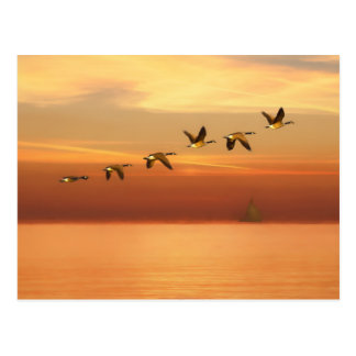 Canada Geese in Flight at Sunset Postcard