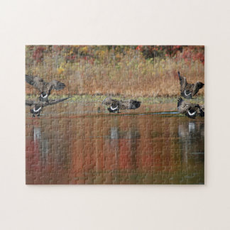 Canada geese in flight jigsaw puzzle