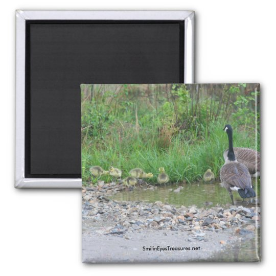 Canada Geese Mum Babies Nature Photo Magnet