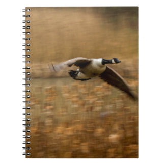 Canada Geese Notebook