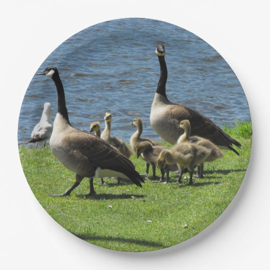 Canada Geese on the Grass by the Water Paper Plate 9 Inch Paper Plate