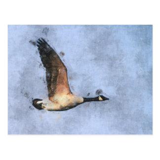 Canada Geese Postcard
