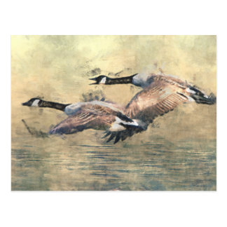 Canada Geese Postcard