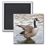 canada goose004 fridge magnet