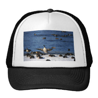 Canada goose and mallards hats