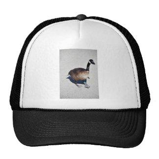Canada goose at Goose Lake, Anchorage Hats
