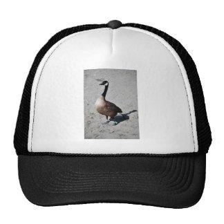 Canada goose at Goose Lake, Anchorage Mesh Hat