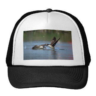 Canada Goose, chasing others away from its territo Hats