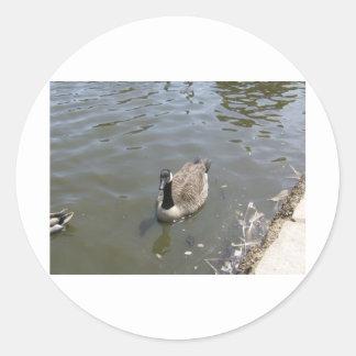 Canada Goose Classic Round Sticker