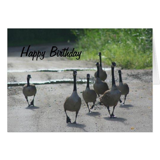 Canada Goose Family Nature Birthday Card