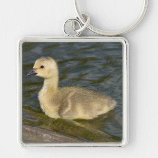 Canada Goose Gosling Key Ring