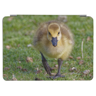 Canada Goose Gosling Walking Tablet Cover iPad Air Cover