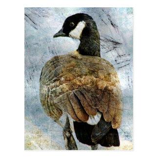 Canada Goose Grunge Postcard