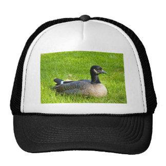 Canada Goose Trucker Hat