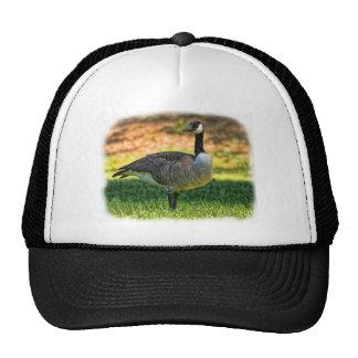 CANADA GOOSE MESH HATS