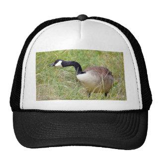 Canada goose in grass cap