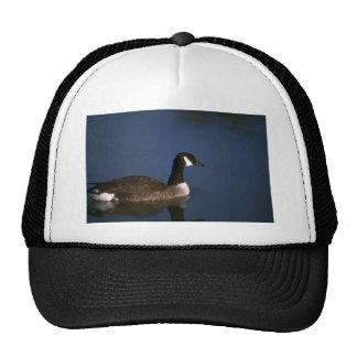 Canada Goose in still water Trucker Hats