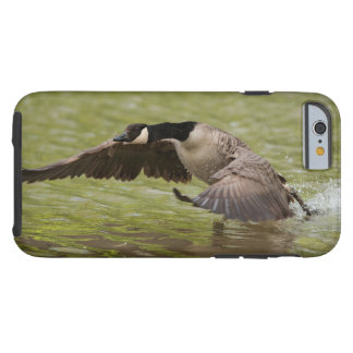 Canada goose landing in water tough iPhone 6 case