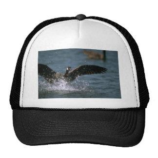 Canada Goose, landing on water Mesh Hats