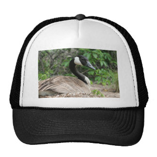 Canada Goose on Her Nest Hats