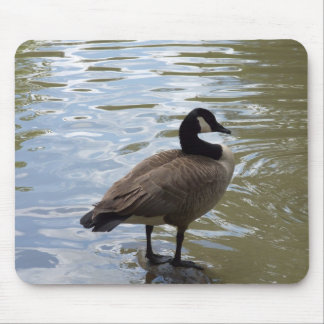 Canada Goose On Rock Mouse Mat