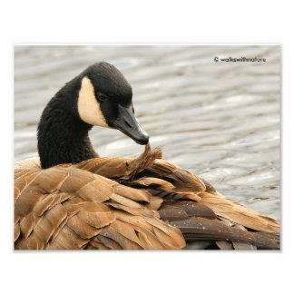 Canada Goose on the Lake Art Photo